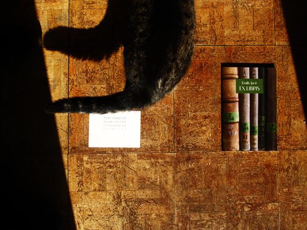 Die Katze Erinnerung / raum:shift
