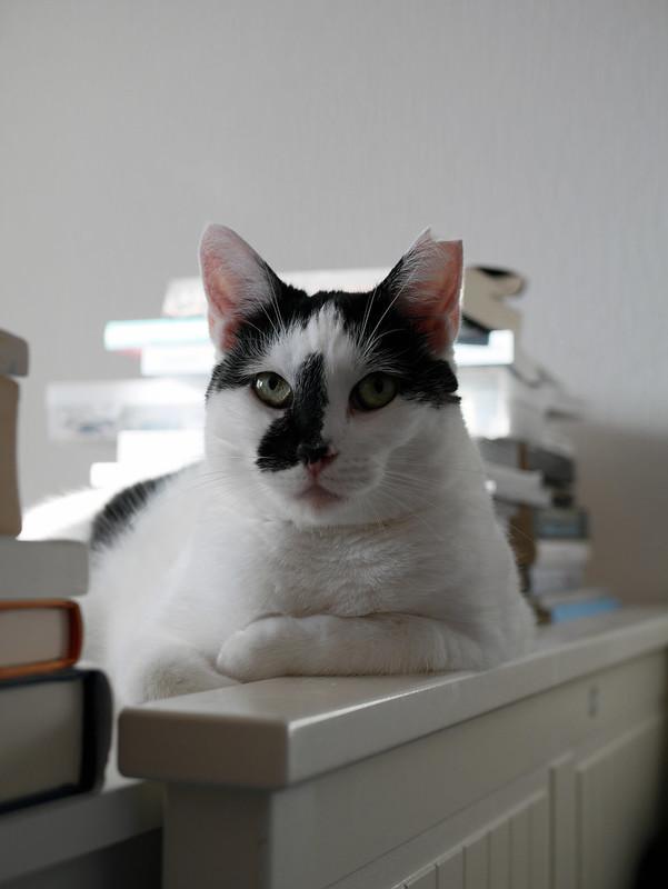 Foto - Eine Katze namens Lisa inmitten von Büchern